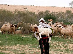 Shepherd with lamb in Negev riverbed, tb q010303